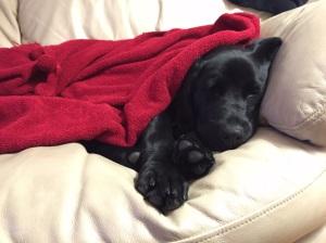 Rosie at 5 months.